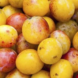 Savage Fruit…